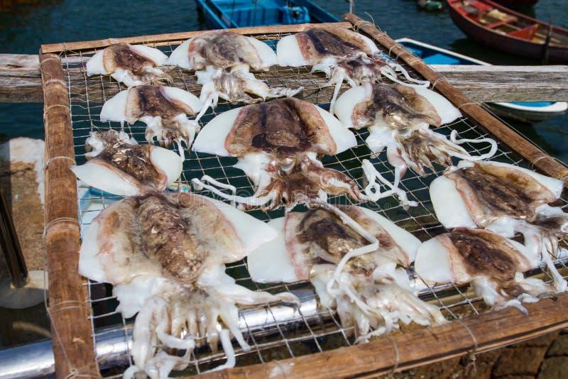 Dry squid royalty free stock photo