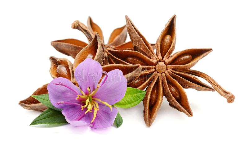 Star anise. royalty free stock image