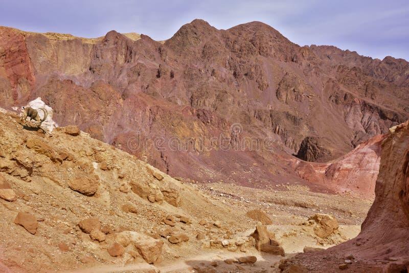 Dry stone desert. Near the southern seaside resort of Eilat, Israel stock image