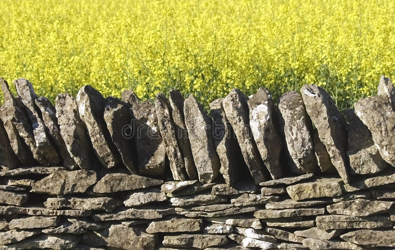 Dry stone wall field of oil seed royalty free stock photography