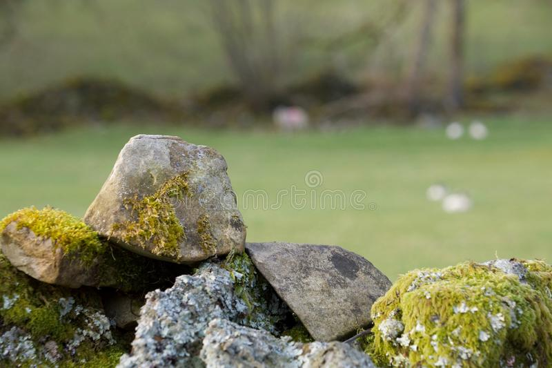 Dry stone wall and sheep field royalty free stock photography