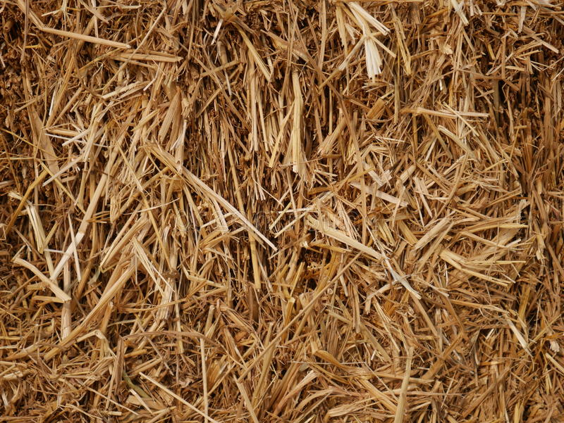 Dry Straw Background. CloseupnPhoto taken on: Feb 20th, 2016 stock photo