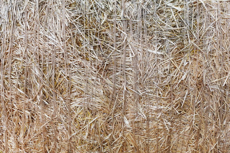 Dry straw closeup texture. Farming background. Dry golden yellow straw closeup. Farming harvest background. Agricultural pressed thatch wall texture. Abstract royalty free stock photos