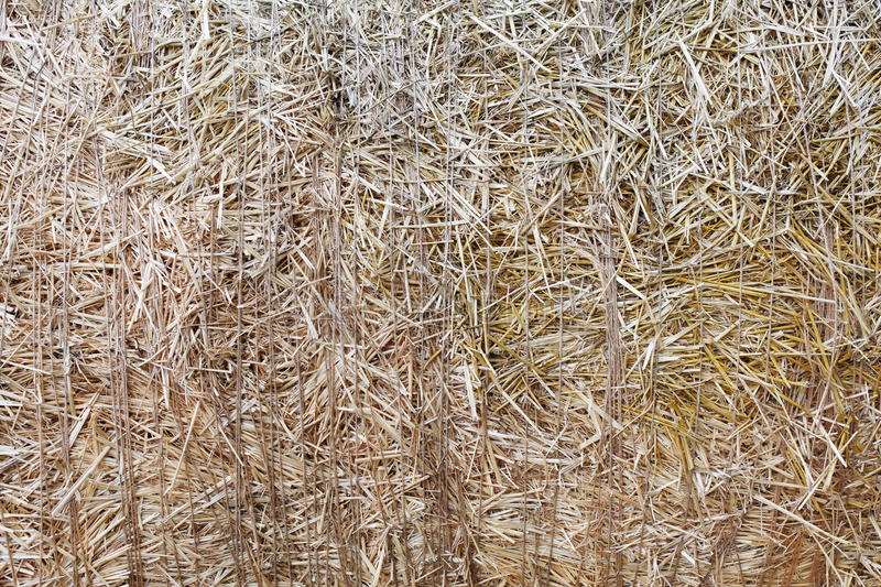 Dry straw closeup texture. Farming background. Dry golden yellow straw closeup. Farming harvest background. Agricultural pressed thatch wall texture. Abstract royalty free stock images