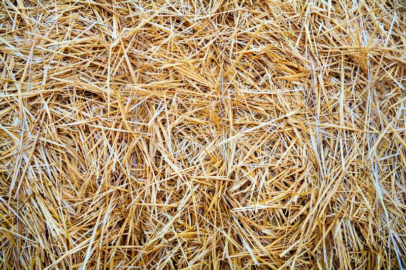 Dry straw texture background royalty free stock photo