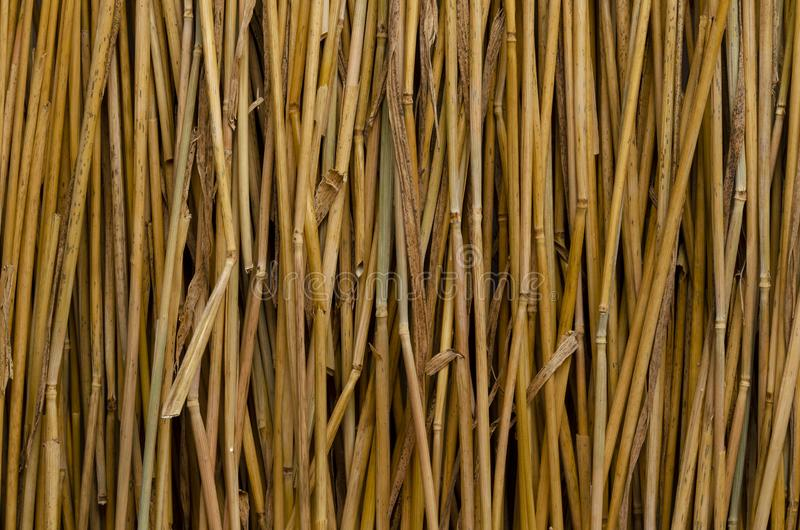 Dry straw texture background, style for design.Reeds texture. Straw surface stock images