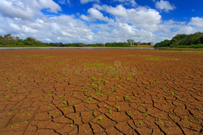 Dry summer with blue sky and white clouds. Dryness lake in the hot summer. Cano Negro, Costa Rica. Mud lake with little green flow.  stock photo
