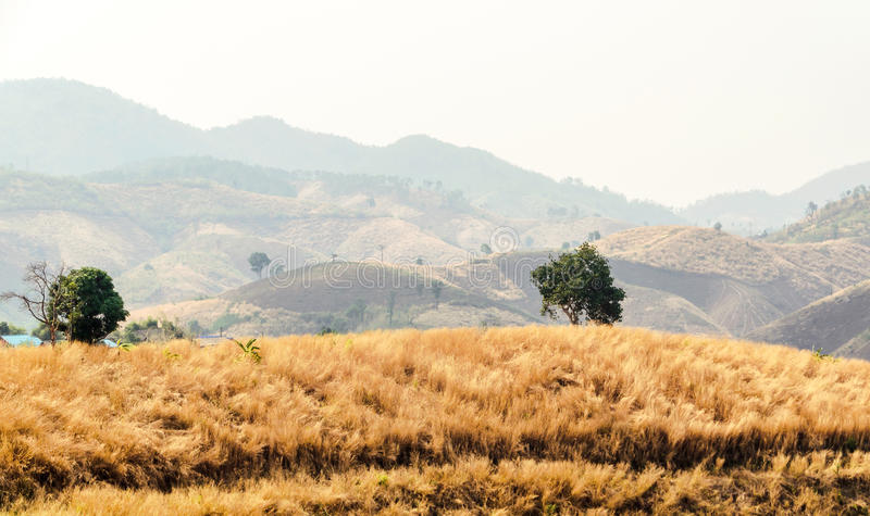 Dry summer pastures mountains. Mae Suai in Thailand stock images
