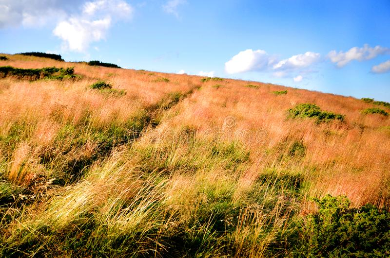 Dry and tall grass in the mountains stock photos