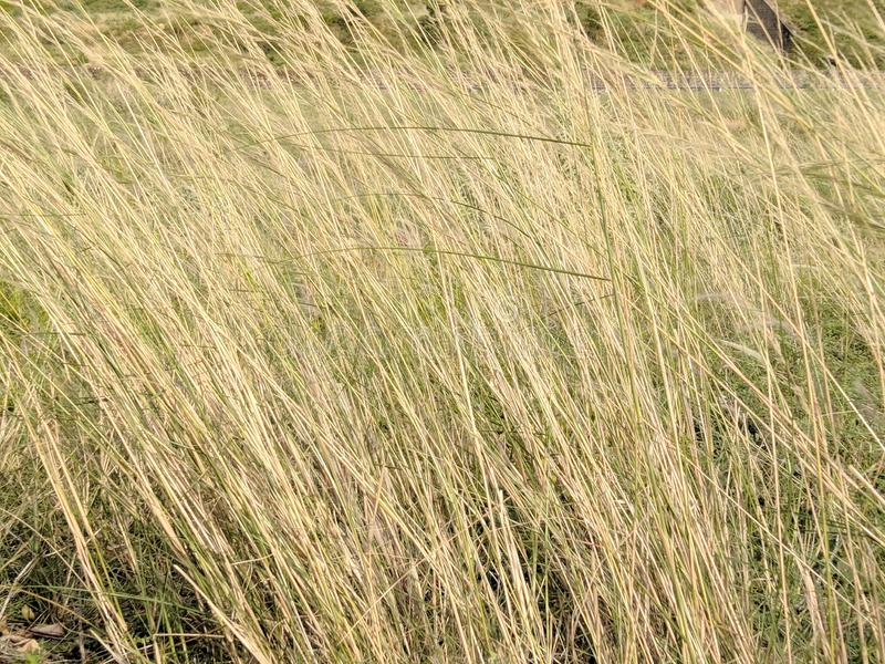 Tall Grass Texture Stock Images - Download 3,272 Royalty