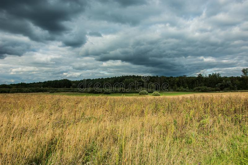 Dry and tall grass in a wild meadow, forest and dark rainy clouds royalty free stock image