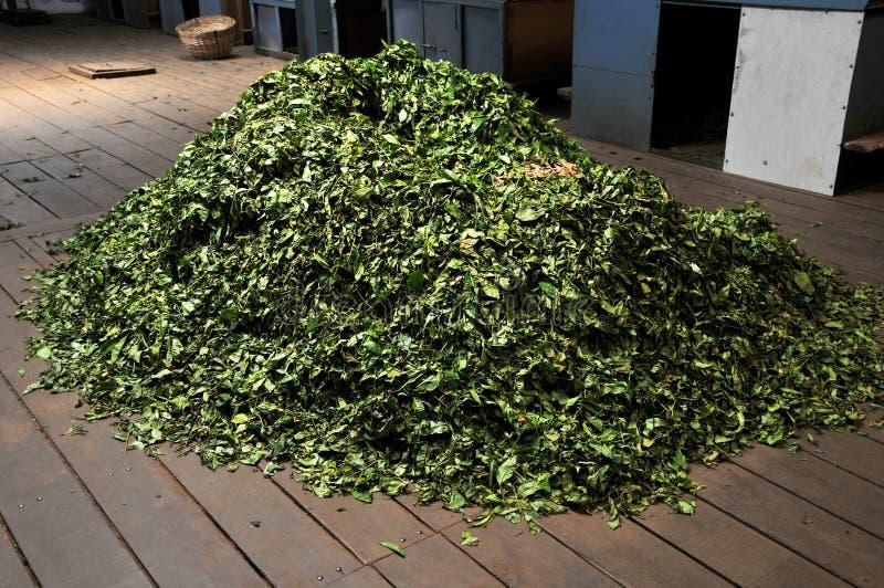 Download Dry tea leaves stock image. Image of natural, horizontal - 14566105