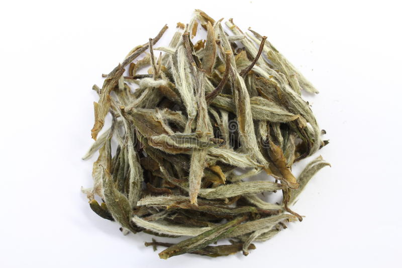 Dry Tea stock image