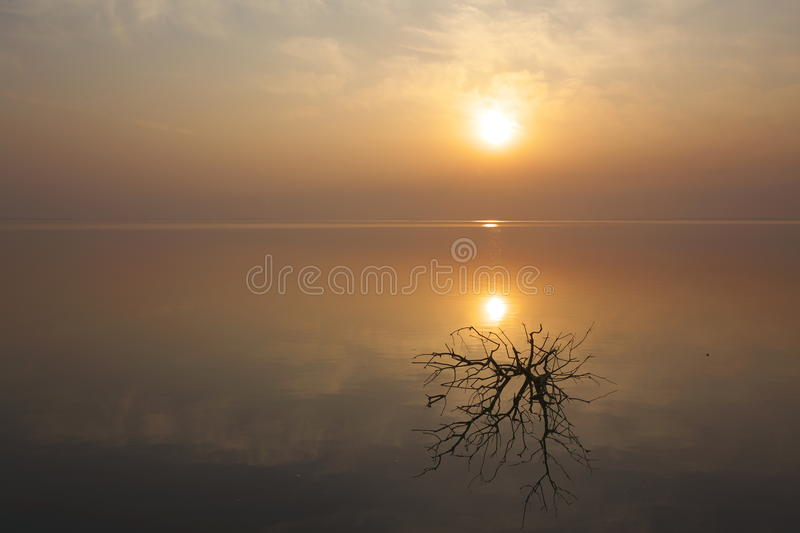 A dry tree. There is a dry tree in the middle of lake stock photos
