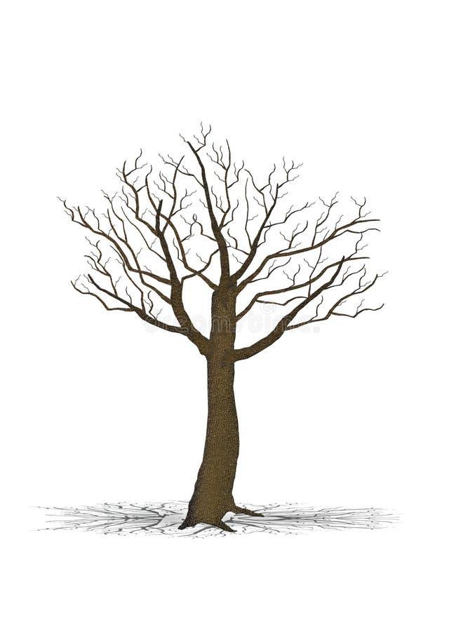 Dry Tree Royalty Free Stock Photos