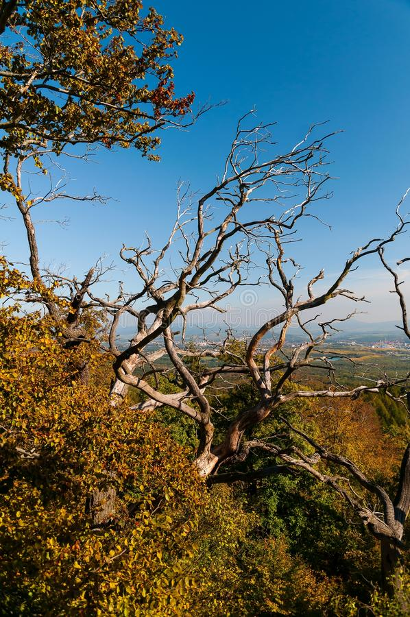 Download Dry tree stock photo. Image of landscape, exploration - 28851536