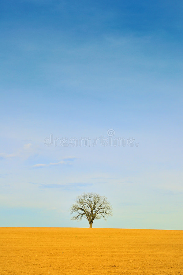 Download DRY Tree Stock Images - Image: 5507624