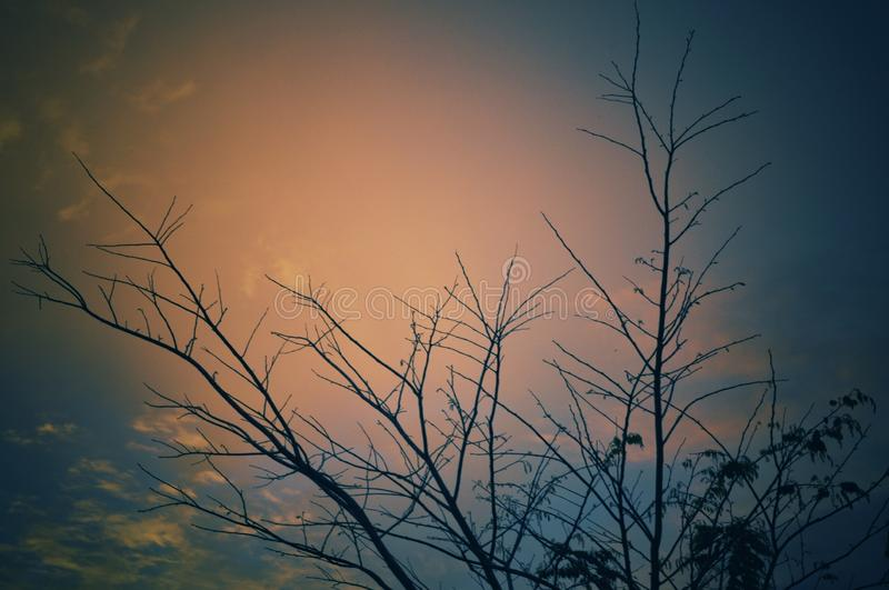 Dry tree with afternoon sky royalty free stock photo