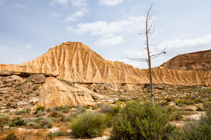Dry tree in Bardenas Reales, Navarra, Spain. The Bárdenas Reales is a semi-desert natural region, or badlands, of some 42,000 hectares (100,000 acres) in royalty free stock photo
