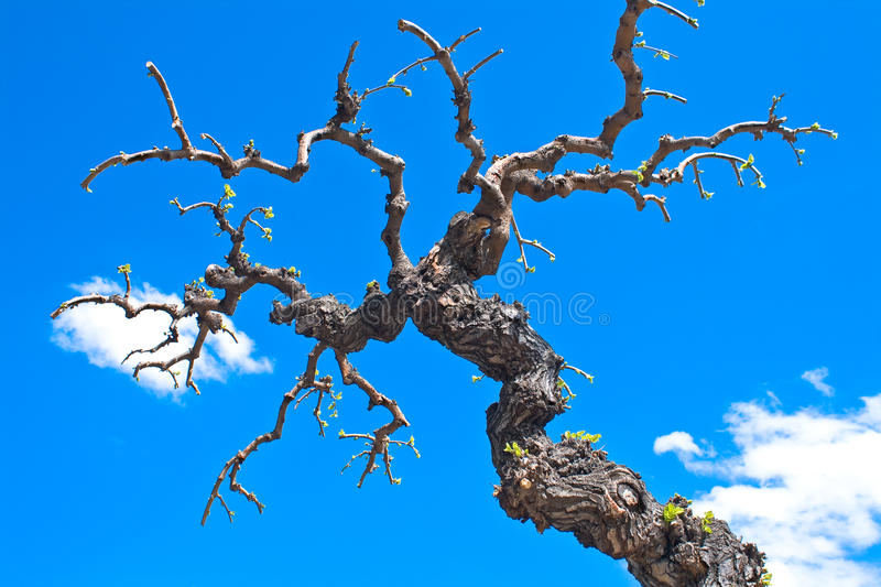 Dry tree branches royalty free stock images