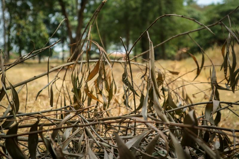Dry tree branches above the ground. Photos taken in Bekasi city - Indonesia stock photography