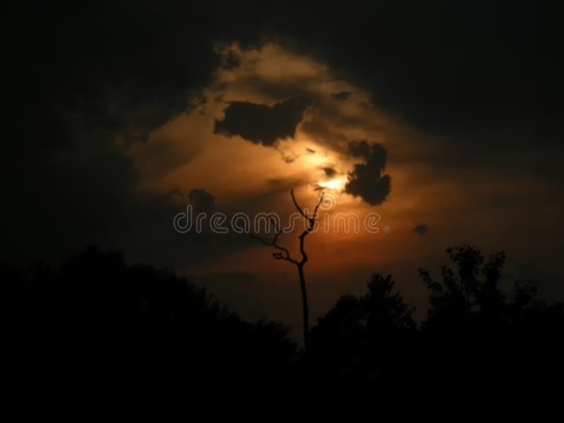 Dry tree branches and sunset on the background at summer evening royalty free stock photo