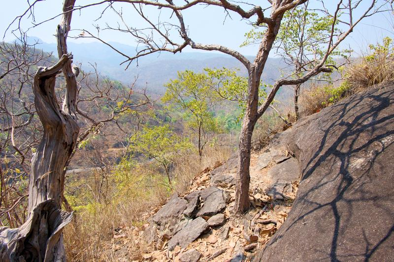 Dry tree on cliff or mountain with blue sky at Op Luang National Park, Hot, Chiang Mai, Thailand. Hot weather and arid. stock images