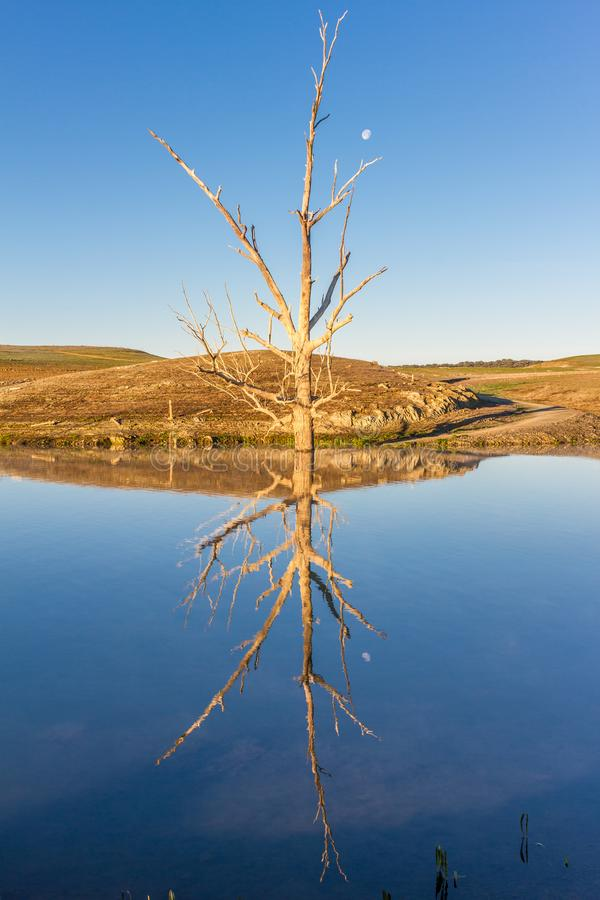 Dry tree and moon reflection paragliders stock photo