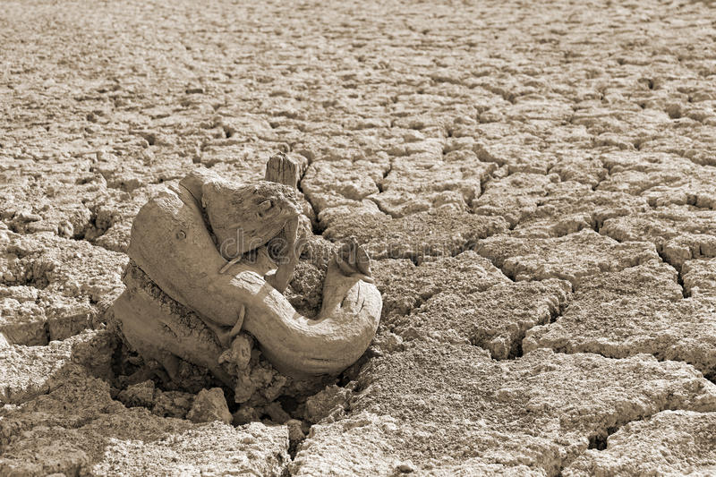 Dry tree root on the dried soil, sepia stock photo