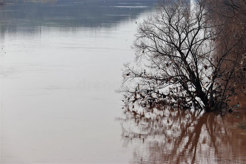 A dry tree standng in the water royalty free stock photography