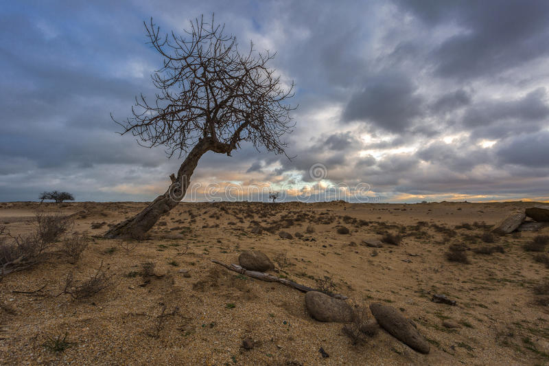 Dry tree before the storm royalty free stock photography