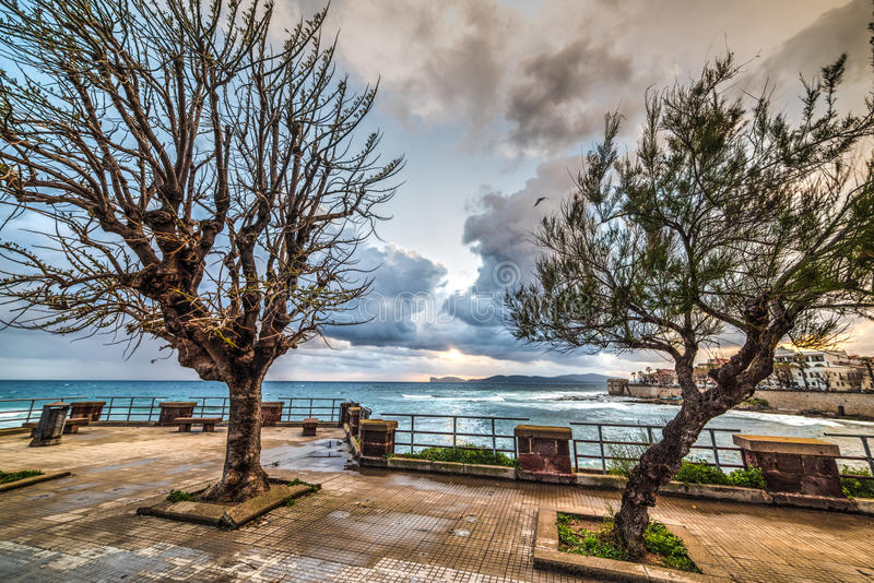Dry trees in Alghero. Seafront, Italy stock photos