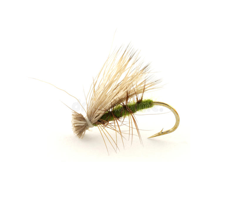 Dry trout fly. A single dry fly for trout fishing against a white background stock images