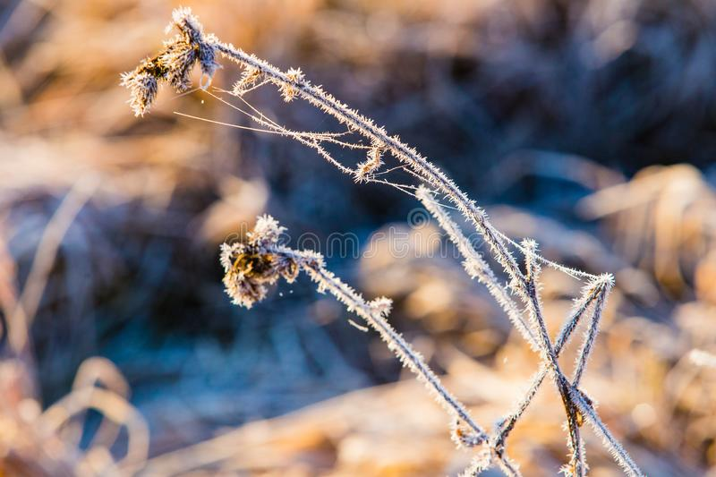 Dry twig white with frost macro. Cold morning concept. Climate change. Concept stock photo