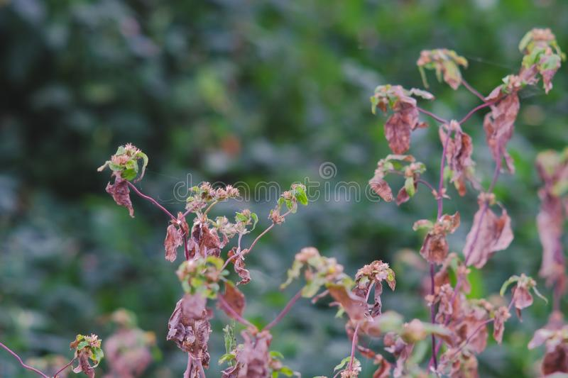 Dry of unwanted flora flower. Selective focus royalty free stock image