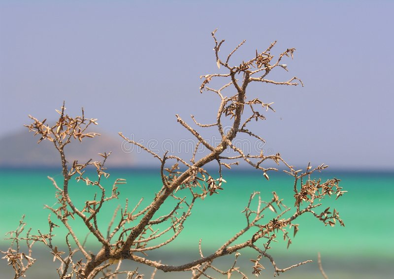 Dry up branch. Dried up branch on the beach royalty free stock photos