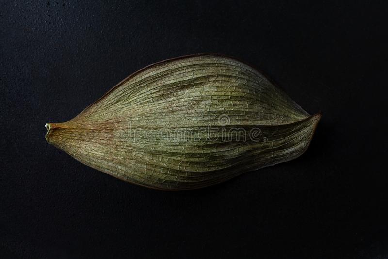 Dry wavy leaf on a dark background royalty free stock images