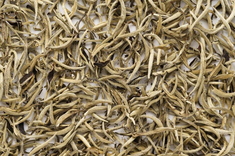 Dry white tea leaves as a background. Chinese Bai Hao Yin Zhen royalty free stock photos