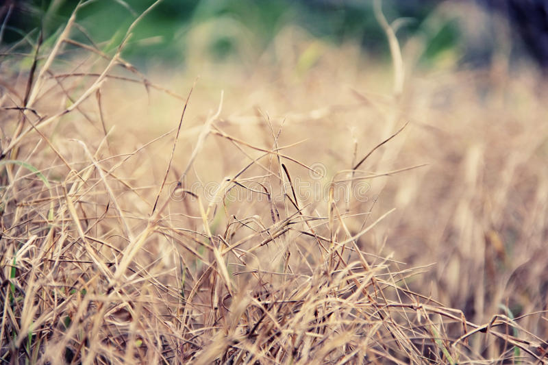 Dry wild grassland in a countryside. Dried wild grasses in a countryside landscape, filtered in pastel color tones royalty free stock photos