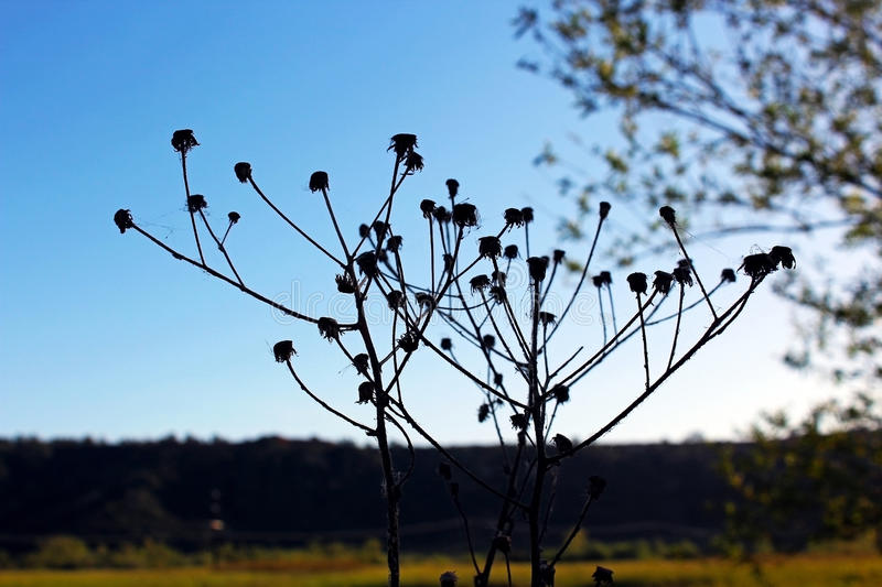 Dry Yallow. Flowers under blue sky royalty free stock photos