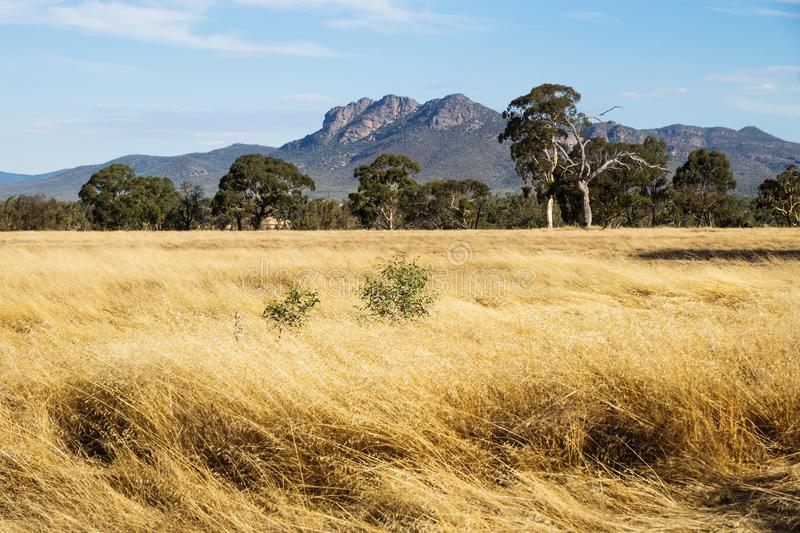 Dry grassland landscape in the bush with Grampians mountains in the background, Victoria, Australia stock photos