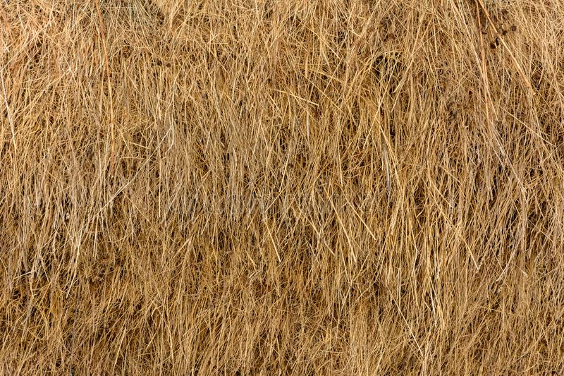 Dry yellow straw grass background texture closeup wallpaper royalty free stock photography