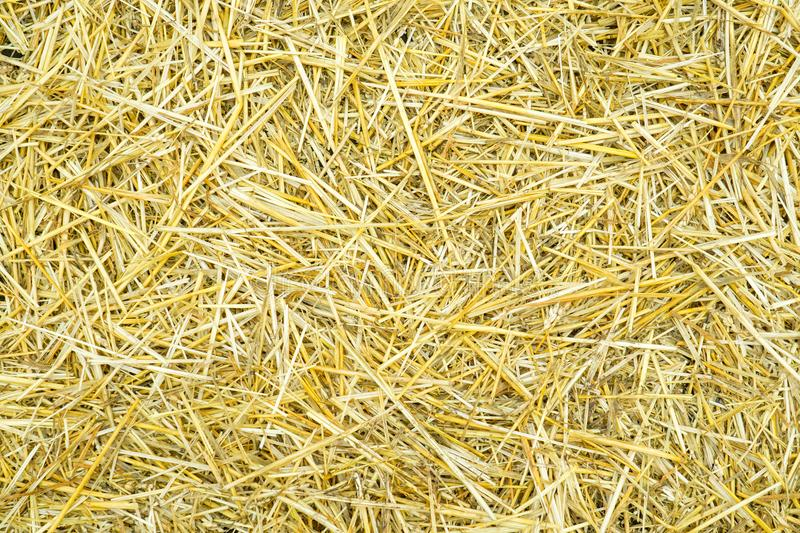 Dry yellow straw grass background texture after havest royalty free stock photography