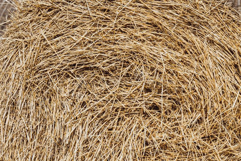 Dry yellow straw grass background texture after havest, Straw bales texture.  royalty free stock photo