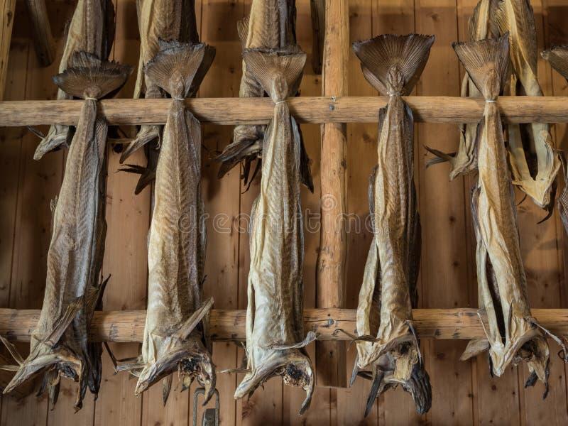 Dryfish accrochant à l'intérieur sur les supports en bois dans des îles de Lofoten, Norvège, l'Europe Image horizontale photo stock