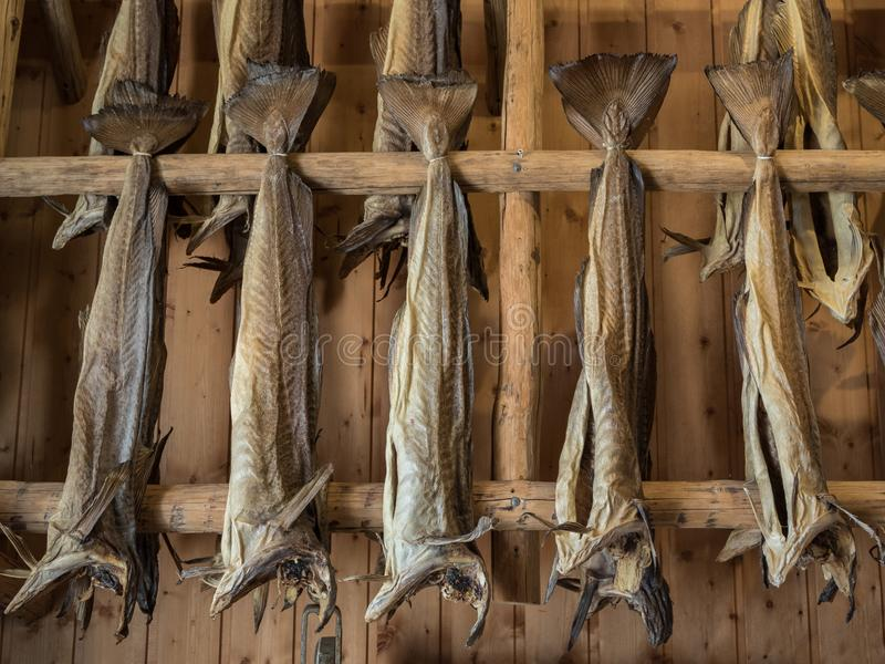 Dryfish hanging inside on wooden racks in Lofoten Islands, Norway, Europe. Horizontal image. Dryfish, cod stockfish hanging inside on wooden racks in Lofoten stock photo