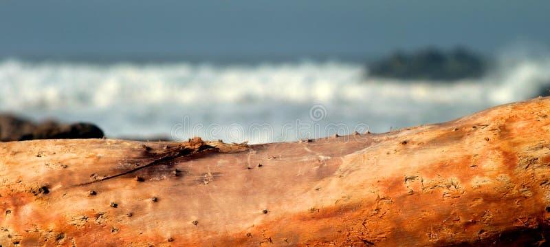 Dryftowy drewno fotografia royalty free
