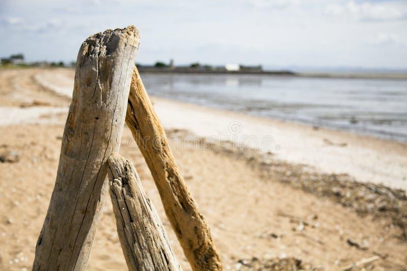 Dryftowy drewno na plaży. obraz stock