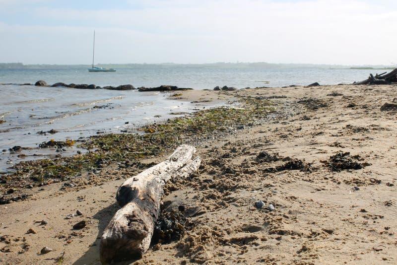 Dryftowy drewno przy plażą z żeglowanie łodzią w tle obrazy stock