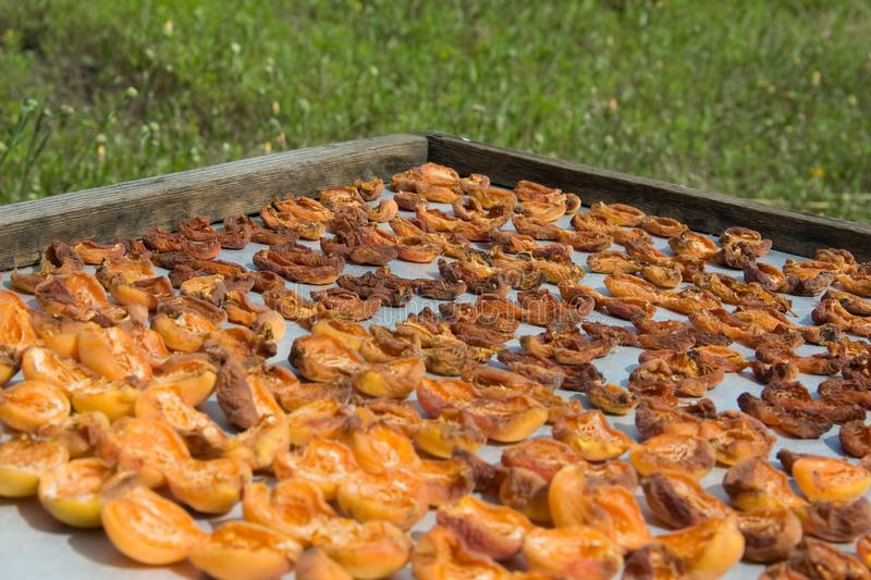 Drying apricot in the sun. Apricot halves are spread out on a metal sheet and dried in the sun stock image